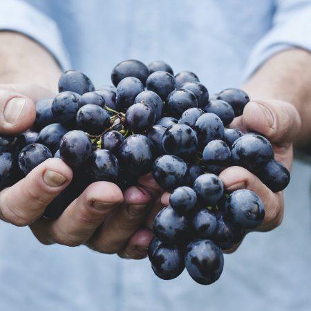 Alles wat je moet weten over Merlot wijn